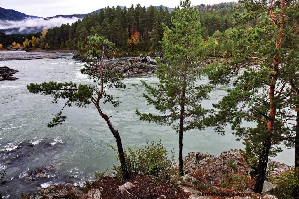 река Катунь. Горный Алтай Чемальский район.