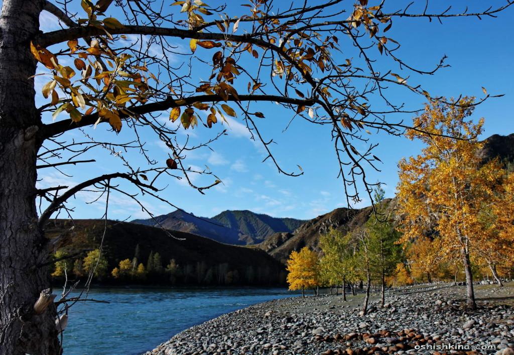 Река Катунь. Горный Алтай.