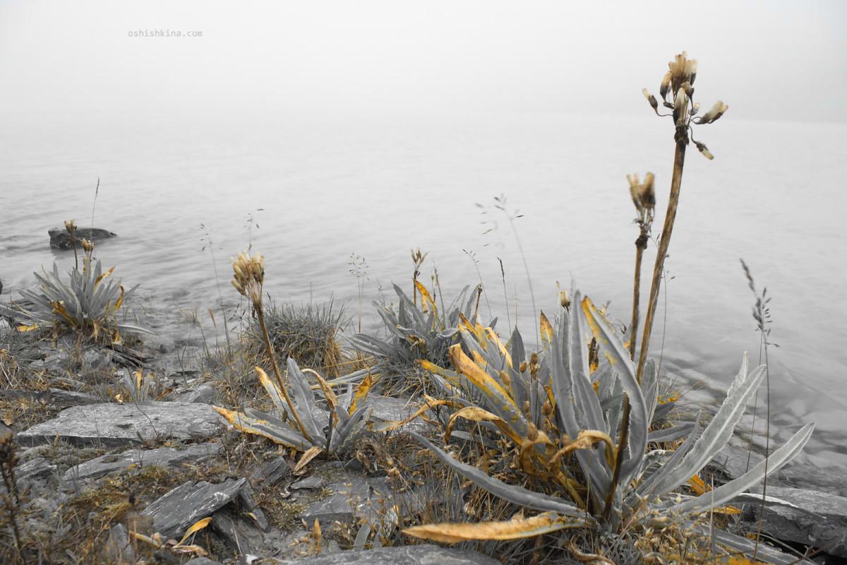 горный алтай озеро аккем гора Белуха